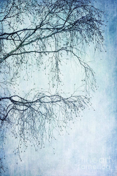 Birch Photograph - Hold On Till Spring Will Come by Priska Wettstein