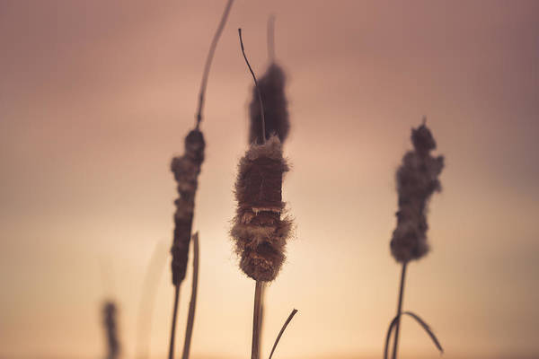 Cattails Wall Art - Photograph - Hold On To Me by Shane Holsclaw