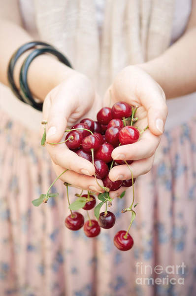 Juicy Fruit Wall Art - Photograph - Holding Cherries  by Viktor Pravdica