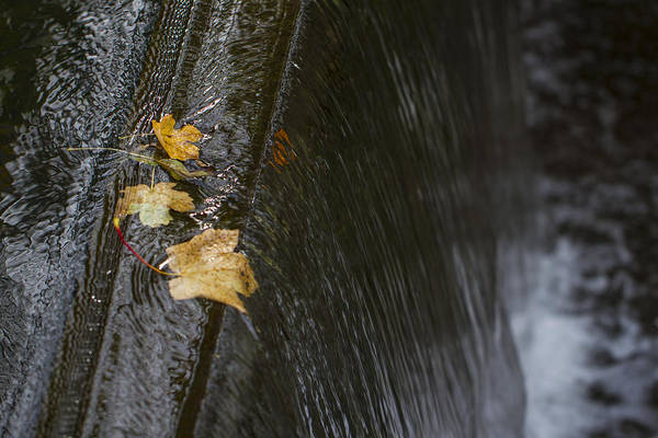 Photograph - Holding On To The Edge. by Clare Bambers