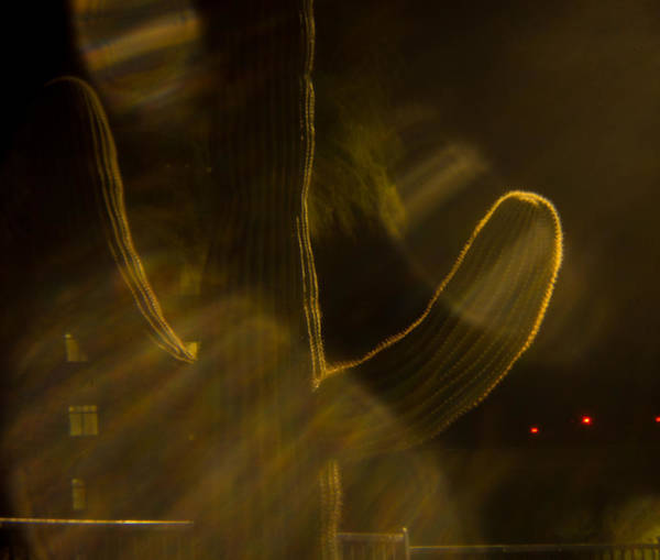Camera Raw Photograph - Holga Saguaro 10 by Carolina Liechtenstein