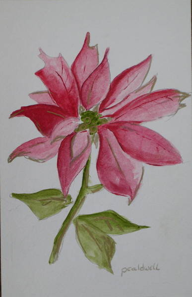 Wall Art - Painting - Holiday Flower by Patricia Caldwell