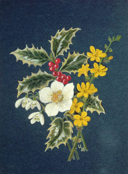 Jasmin Photograph - Holly, Christmas Rose, Snowdrop And Winter Jasmine Wc On Paper by Ursula Hodgson
