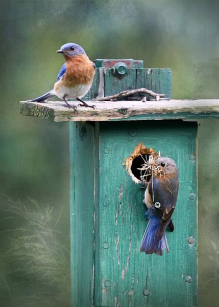 Birds Nest Photograph - Home Sweet Home by Lori Deiter