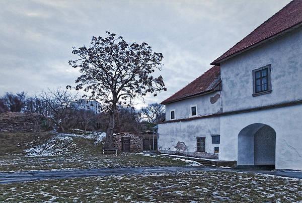 Photograph - Homestead And Tree by Roberto Pagani