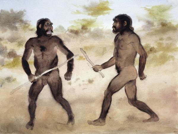 Wall Art - Photograph - Homo Erectus Attacking Paranthropus by Natural History Museum, London/science Photo Library