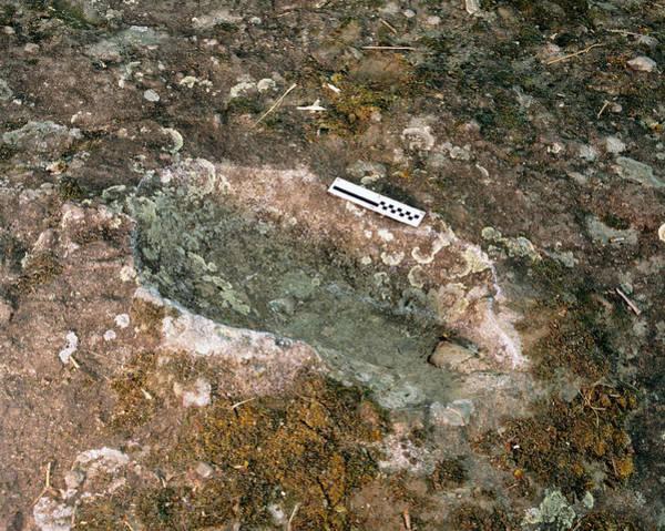 Wall Art - Photograph - Homo Erectus Footprint by Mauro Fermariello/science Photo Library