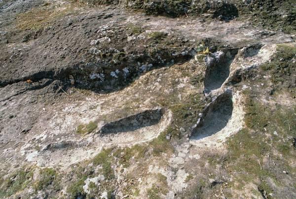 Impression Photograph - Homo Erectus Footprints by Mauro Fermariello/science Photo Library