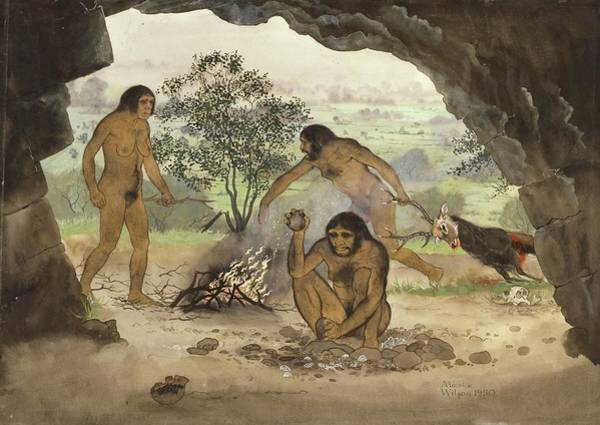 Wall Art - Photograph - Homo Erectus by Natural History Museum, London/science Photo Library