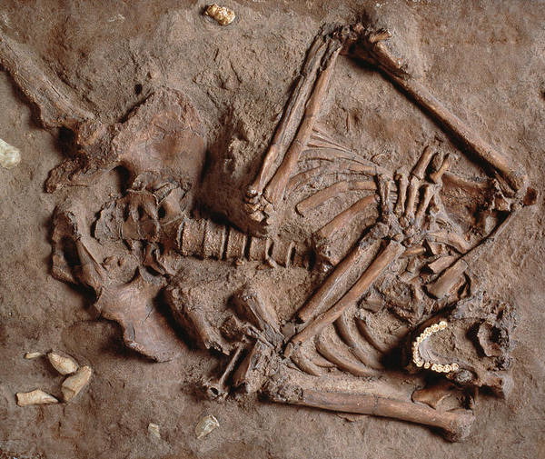Quaternary Photograph - Homo Neanderthalensis Kebarah Burial Site by Natural History Museum, London
