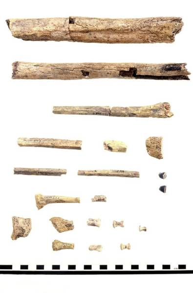 Er Photograph - Homo Skeleton Fragments by John Reader/science Photo Library