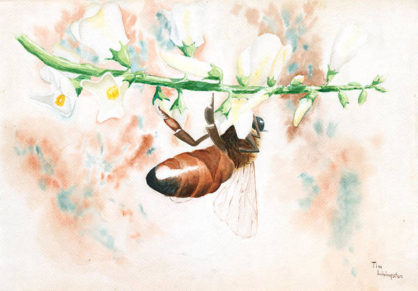 Wall Art - Painting - Honey Bee by Timothy Livingston