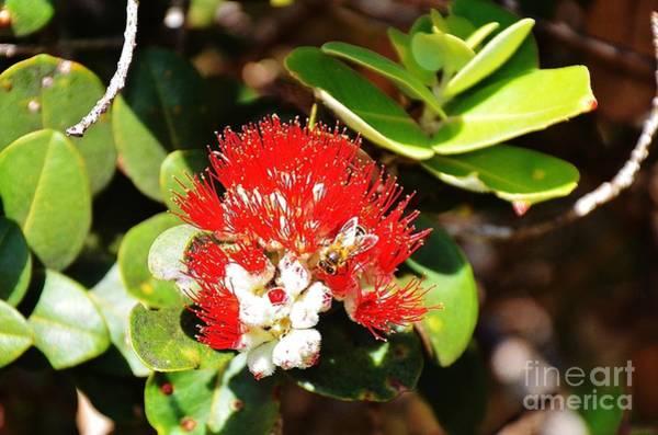 Ohau Wall Art - Photograph - Honeybee Flowers by Brenda Dorman