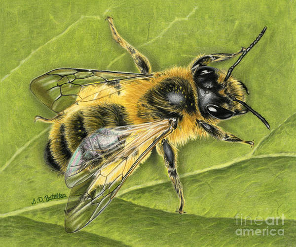 Pollinator Wall Art - Painting - Honeybee On Leaf by Sarah Batalka