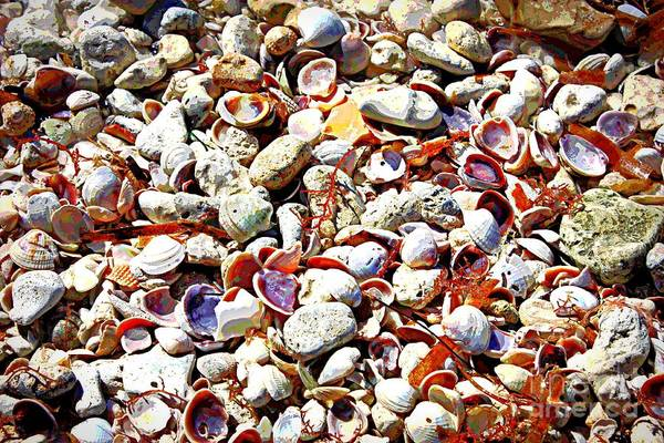 Photograph - Honeymoon Island Shells - Digital Art by Carol Groenen
