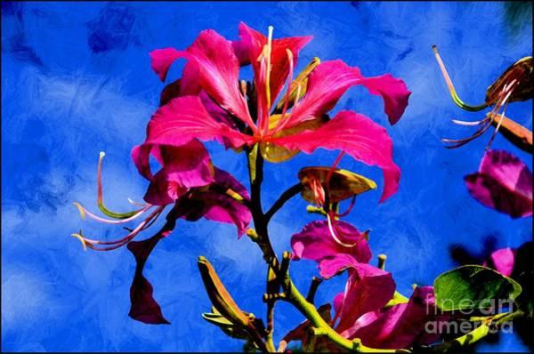Hong Kong Orchid Photograph - Hong Kong Orchids by Elaine Manley