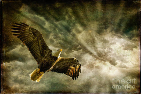 Flying Eagle Photograph - Honor Bound In Blue by Lois Bryan