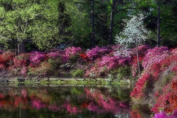 Muskogee Photograph - Honor Heights Park Azalea Festival by Carolyn Fletcher