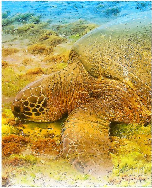 Wall Art - Digital Art - Honu  Sea Turtle by Dorlea Ho