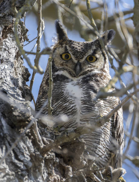 Photograph - Hoo Are You by Loree Johnson