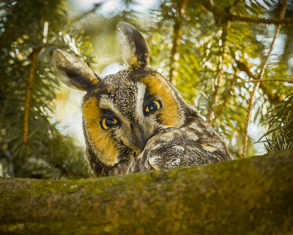 Photograph - Hoo Hoo Hoo by Jack R Perry