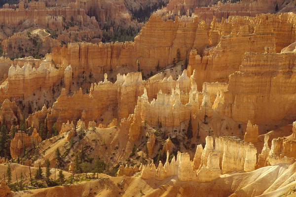 Photograph - Hoodoos Bryce Canyon Utah by Gerry Ellis