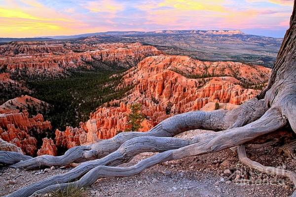 Photograph - Hoodoos In The Canyon by Adam Jewell