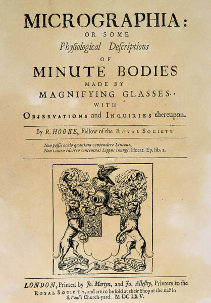 1665 Wall Art - Drawing - Hooke's Micrographia by Granger