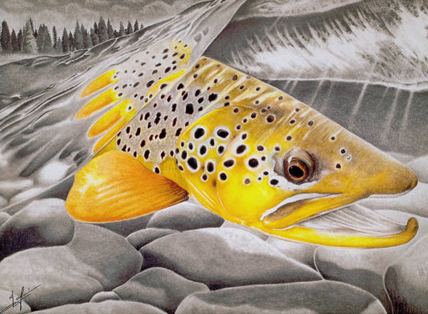 Trout Wall Art - Drawing - Hookjaw On The Move by Nick Laferriere