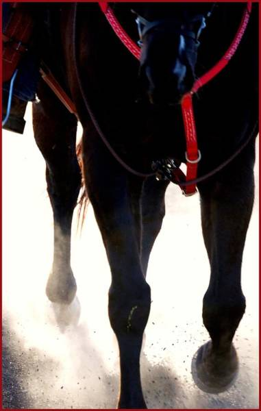 Photograph - Hooves Arena Dust 14358 by Jerry Sodorff