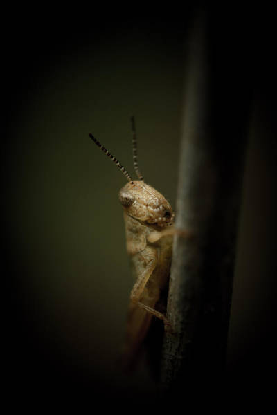 Grasshopper Photograph - hop by Shane Holsclaw