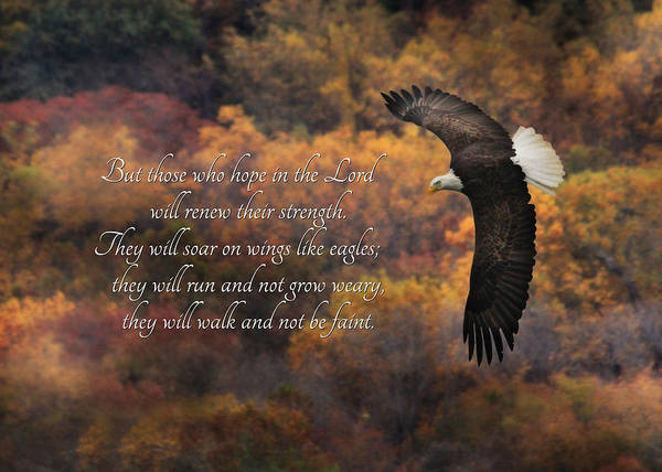 Bible Quotes Photograph - Hope In The Lord by Lori Deiter
