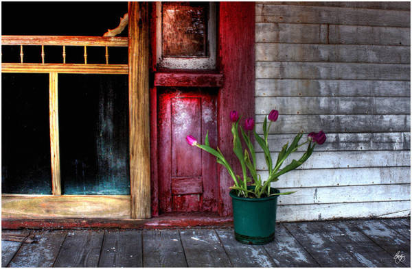Photograph - Hope Writ In Tulips by Wayne King