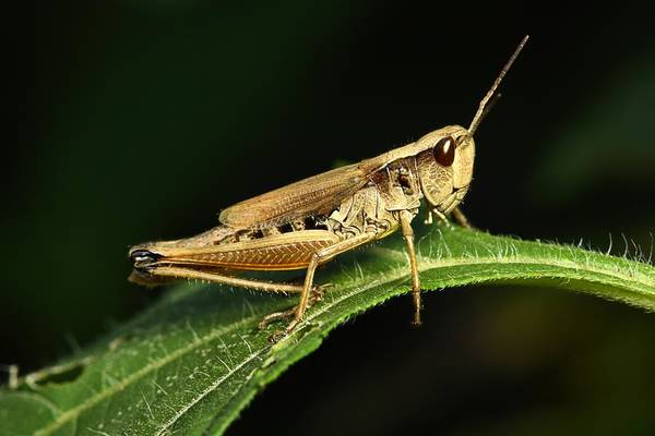 Photograph - Hopper by Mike Farslow
