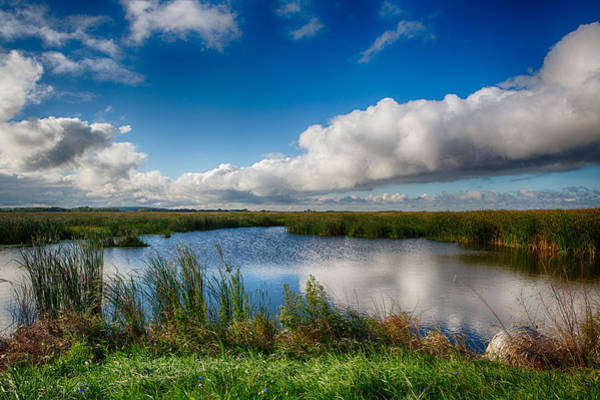 Photograph - Horicon Marsh Wisconsin by Ricky L Jones