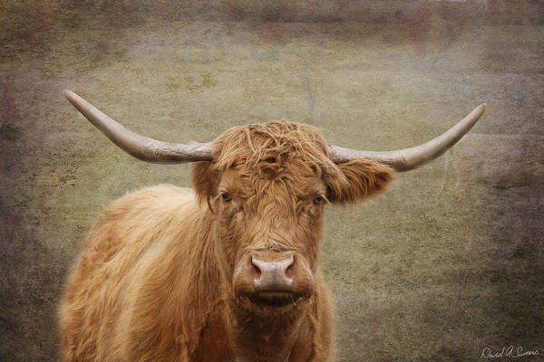Dairy Barn Digital Art - Horns by David Simons
