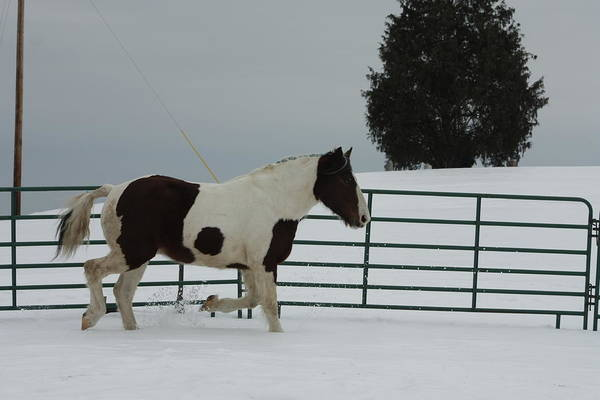 Photograph - Horse 05 by David Yocum