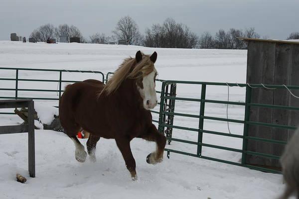 Photograph - Horse 08 by David Yocum