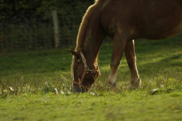Photograph - Horse 19 by David Yocum