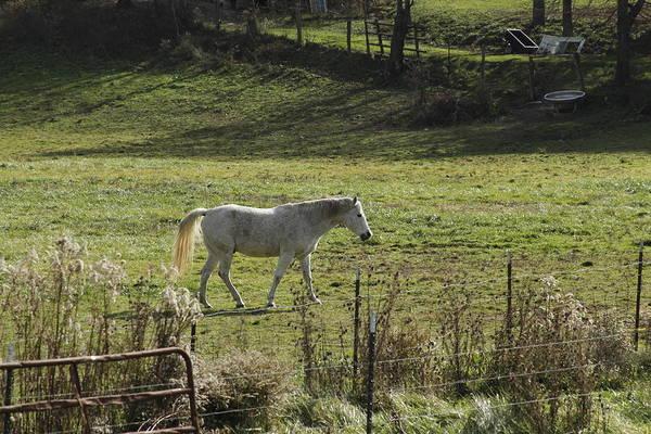 Photograph - Horse 20 by David Yocum