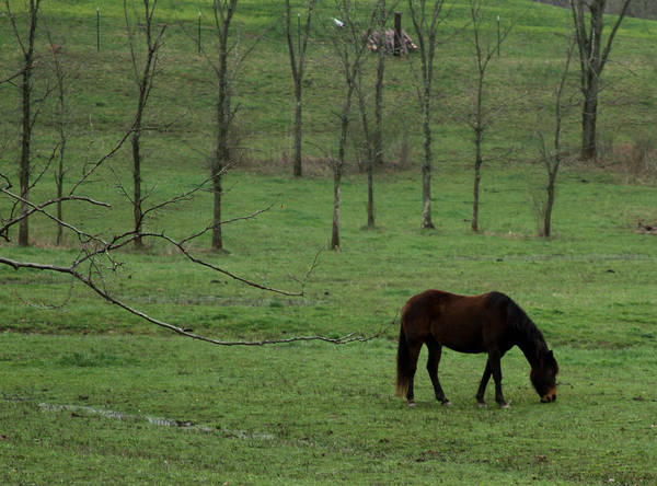 Photograph - Horse 26 by David Yocum