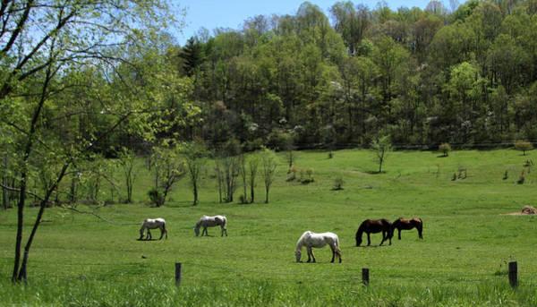 Horse 27 Art Print