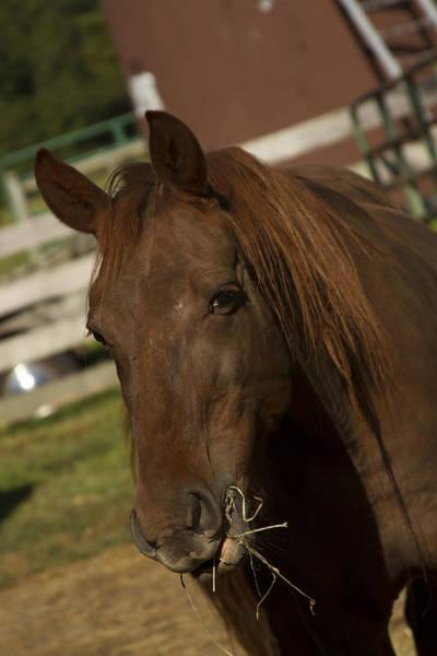 Photograph - Horse 29 by David Yocum