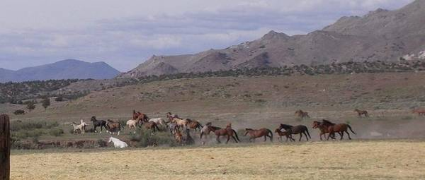 Photograph - Wide Open Range by Wynema Ranch