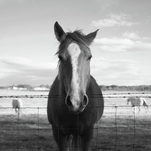 Photograph - Horse by A, Bellefeuil
