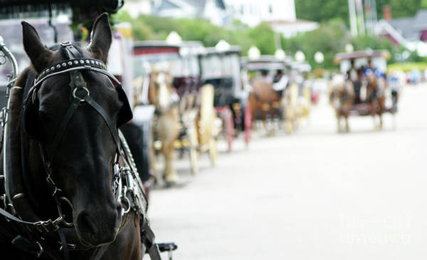Photograph - Horse And Buggy by Linda Shafer