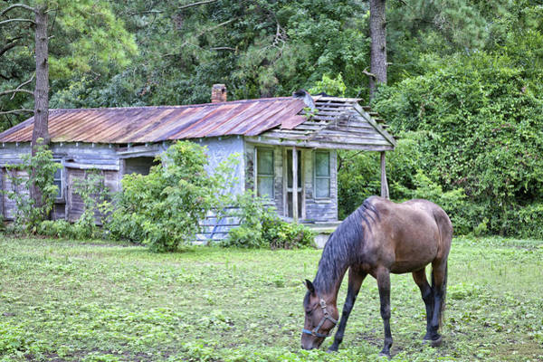 Photograph - Horse And House - Photography By Jo Ann Tomaselli by Jo Ann Tomaselli