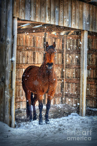 Photograph - Horse And Snow Storm by Dan Friend