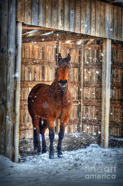 Horse And Snow Storm Art Print