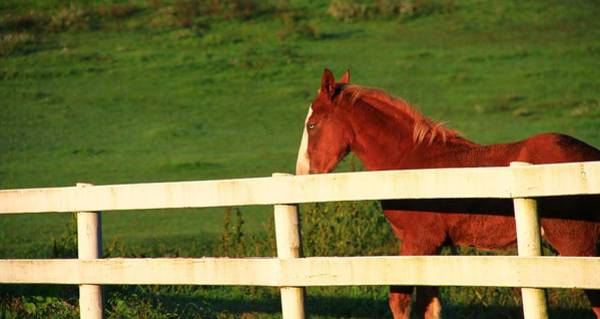 Berlin Ohio Photograph - Horse And White Fence by Dan Sproul